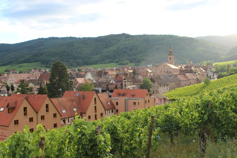 世界遺産!フランスで最も美しい「葡萄畑の真珠」の村、リクヴィール
