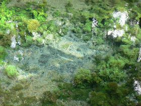 阿蘇のパワースポット「白川水源」の清らかな湧泉に感動!