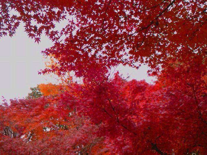 秋には紅葉も美しい、自然パワースポット「大宰府政庁跡」。