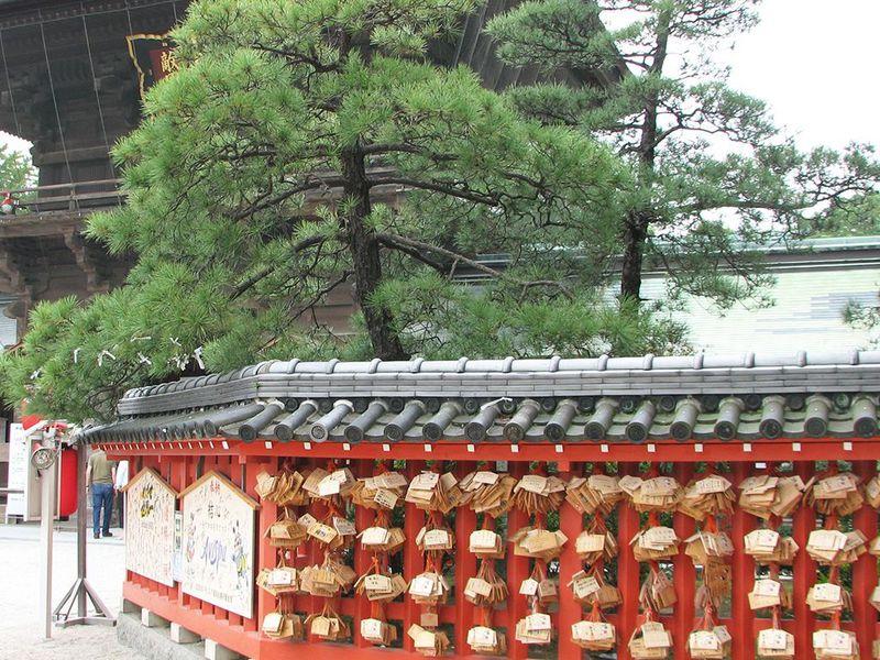 筥崎宮のパワースポットNo.4 御神木「筥松」