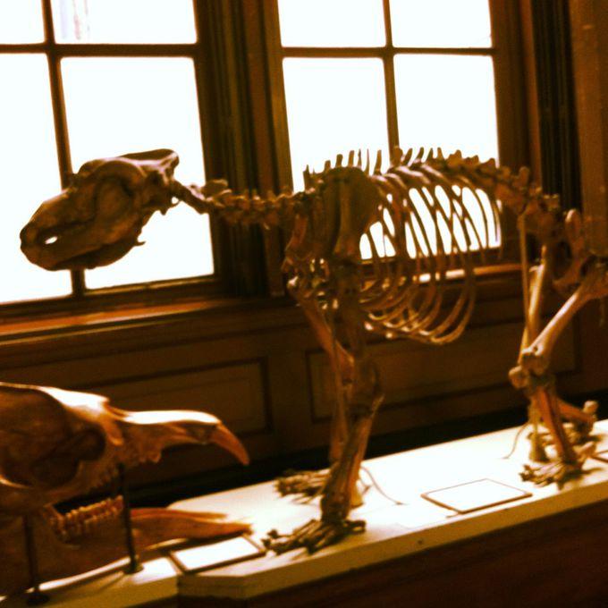230年以上の歴史を持つ、オランダ最古のテイラー博物館