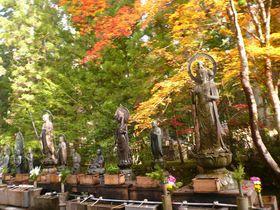 高野山で寺と秋のコラボレーションが素敵な紅葉を見よう!