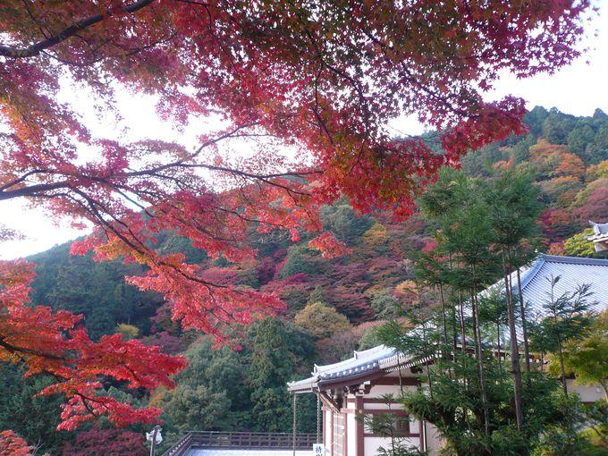 善峯寺へのアクセス