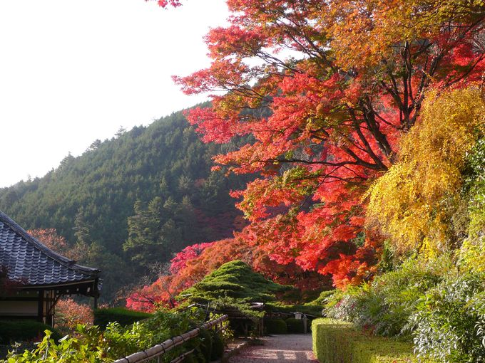 天然記念物「遊龍の松」