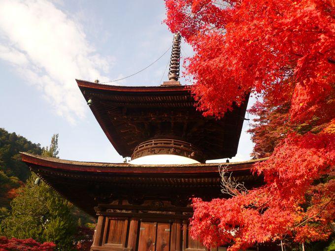 重要文化財「多宝塔」の目が覚めるような赤い紅葉