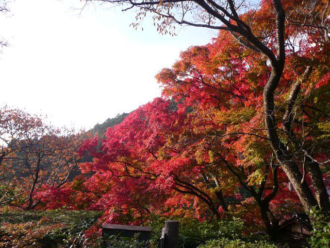 山並みから眼下に広がる京都の街中