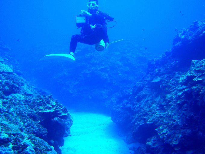 砂地好き!ナイトダイビング好きはココ!「供利沖」