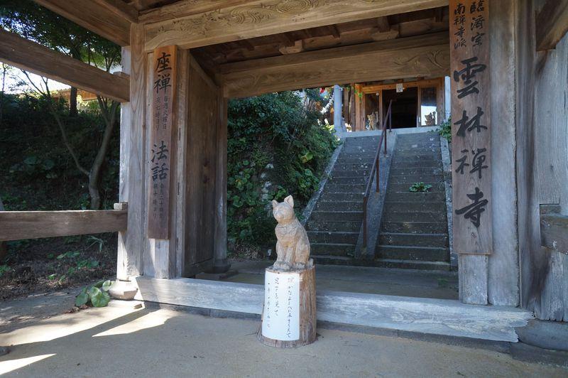 可愛い猫にメロメロ!?猫にまつわる伝説が残る萩市「雲林禅寺」