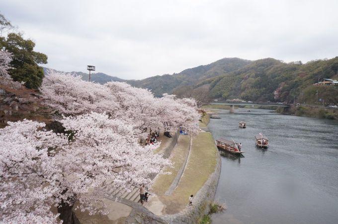 あなたは桜を橋の上から楽しむ?船の上から楽しむ?