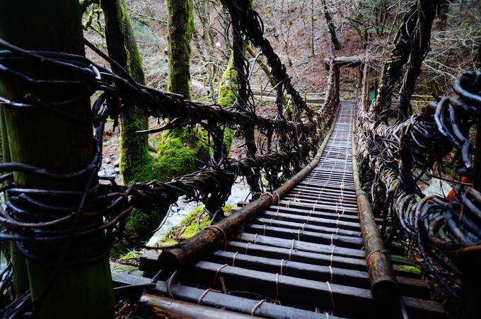 珍名所1「奥祖谷二重かずら橋」でかずら橋の魅力を堪能!