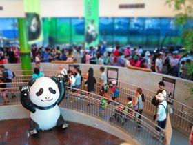 パンダにうっとり、猫でまったり。こんな台北旅行のススメ