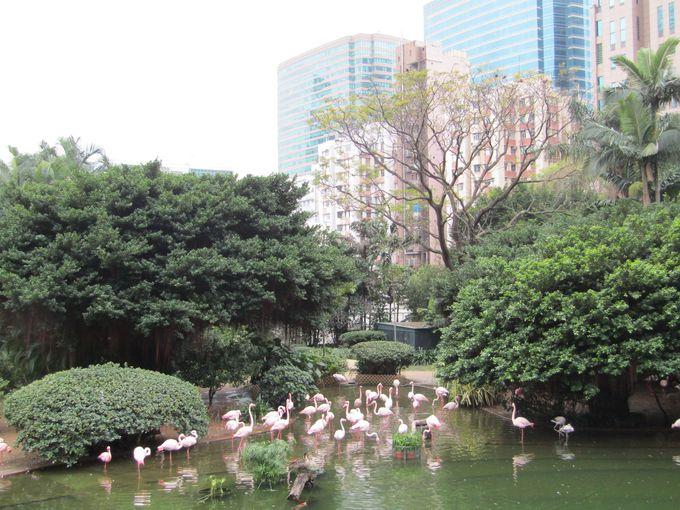 林立するビルを背景に人間も水鳥も憩うバードレイク