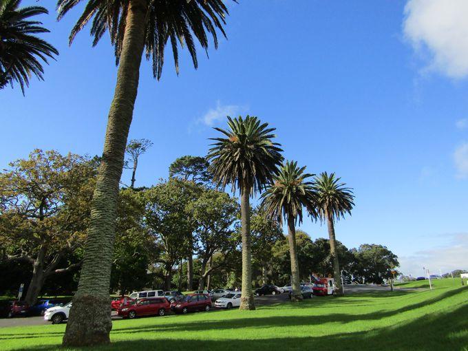 ちょっと足を延ばせば広大な緑の楽園「ニュージーランド・ドメイン」