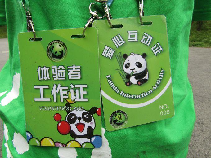 パンダの世話をする「パンダボランティア体験」もできる