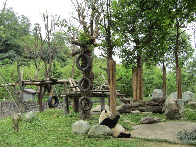 ゆったりした敷地にゆったりしたパンダたちが。