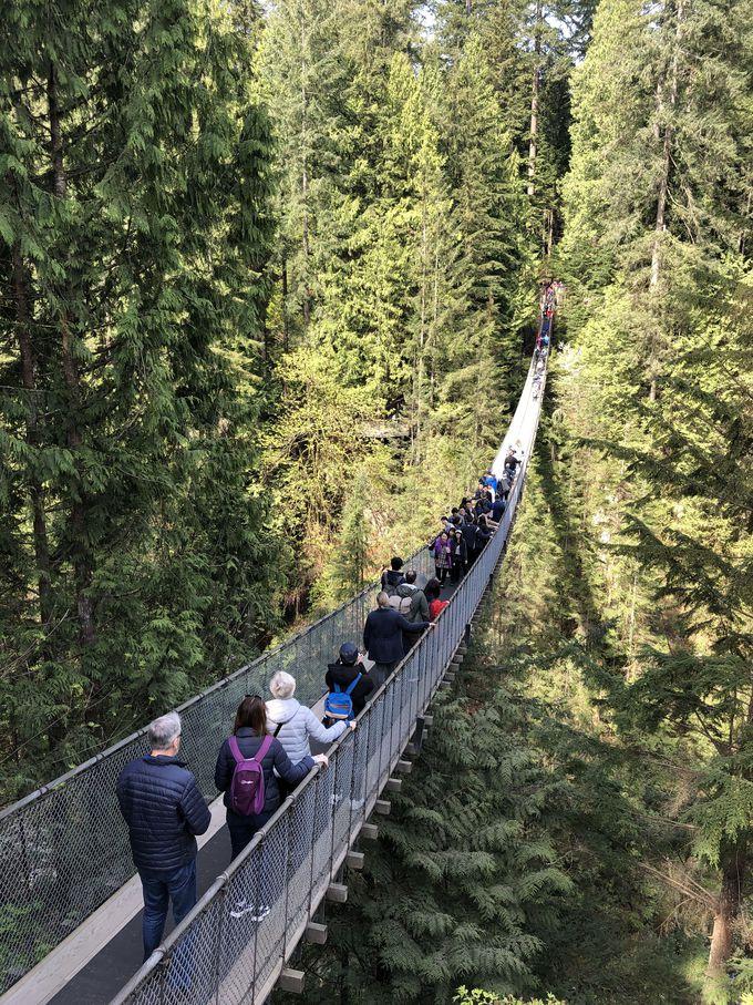 大自然アクティビティーを満喫「キャピラノ吊り橋公園」