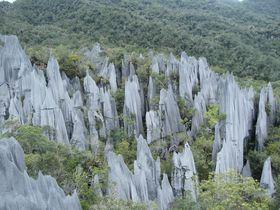 気分は探検家!?マレーシア世界遺産「グヌン・ムル国立公園」