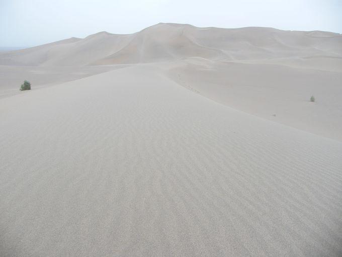 砂漠で寝てこそのシルクロード!?ラクダツアーに行ってみよう