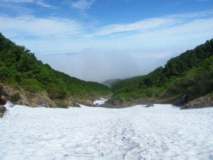 ちなみに雪渓歩きも魅力です!