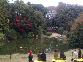 春と秋限定!東京上野の国立博物館の「庭園」を散策!