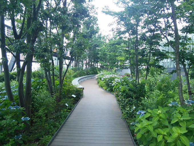 エコミューゼタウンの空中庭園