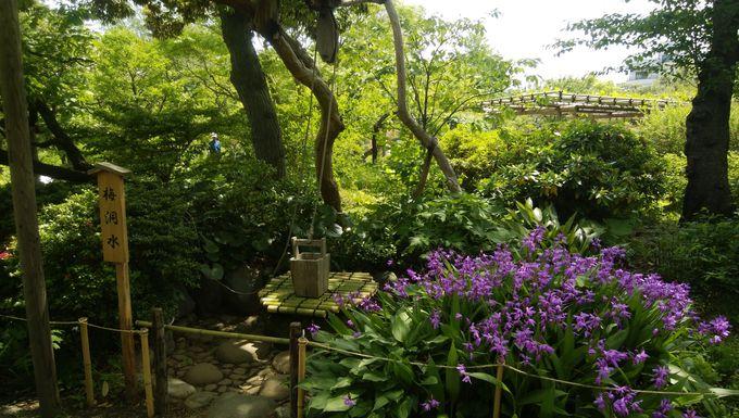 ハナショウブ以外も見たいなら「向島百花園」