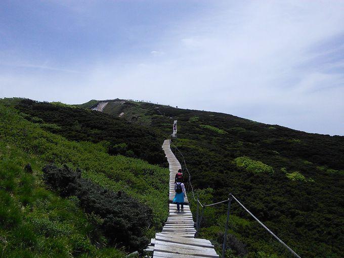 歩きやすい登山道に感謝!