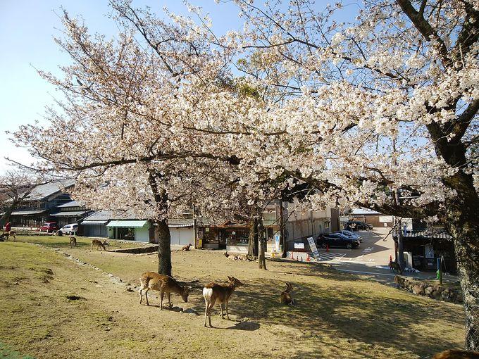 世界遺産「春日大社周辺」も素敵!