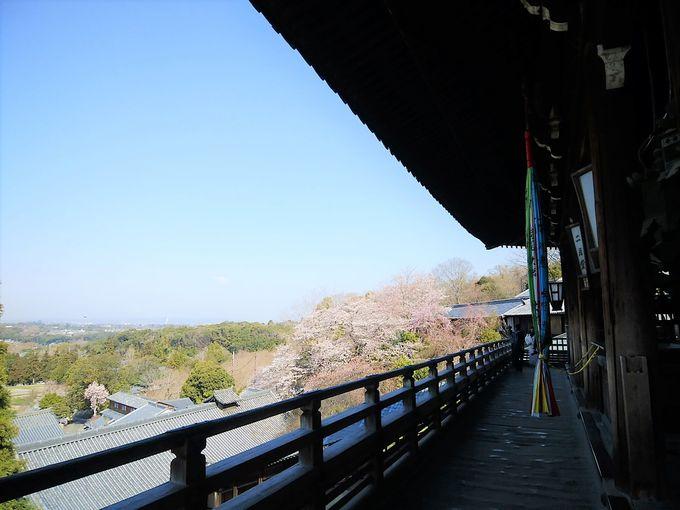 東大寺の裏手も桜が見事!