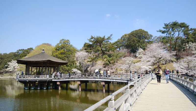 春の奈良公園を散策、桜スポット巡り
