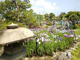 東京の初夏は小岩と堀切のダブル菖蒲園で決まり!