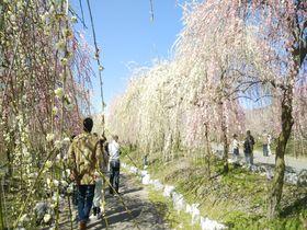 三重の二大梅園!鈴鹿の森庭園といなべ市農業公園で少し早いお花見を