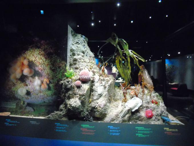 まるで海洋博物館? 海の中の神秘な世界まで忠実に再現