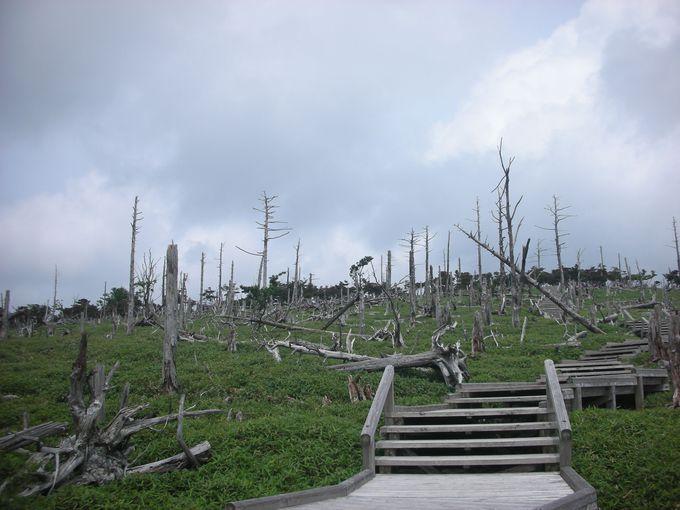 大台ケ原といえば・・・・知る人ぞ知るこの異様な風景。荒涼としたトウヒの倒木と立ち枯れが物語るもの