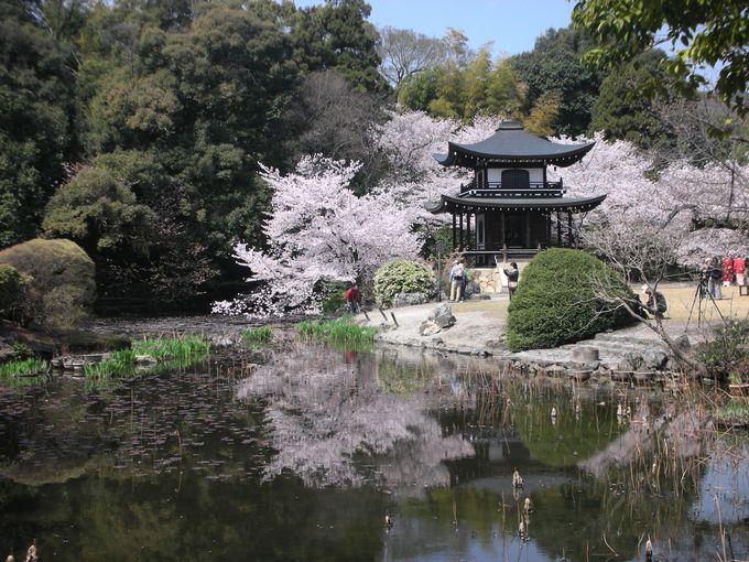 「京都一○○の多い寺」と言われる勧修寺、さて○○の中に入る漢字二文字とは?
