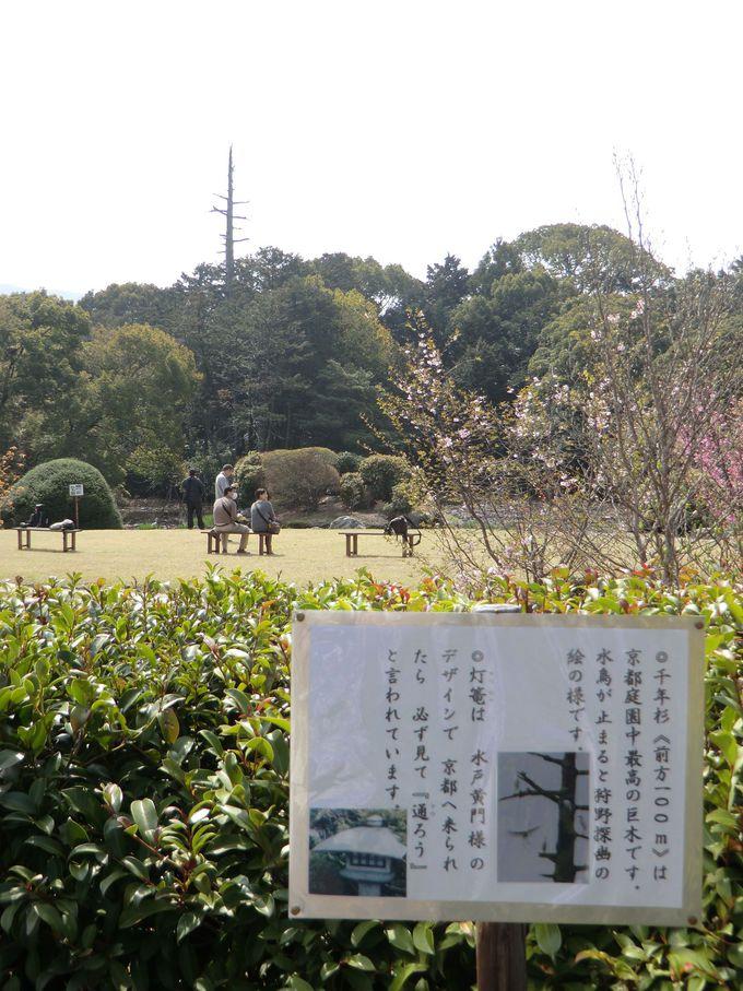 京都へ来たら必ず見て『通(とう)ろう』など、ココだけの見どころも満載