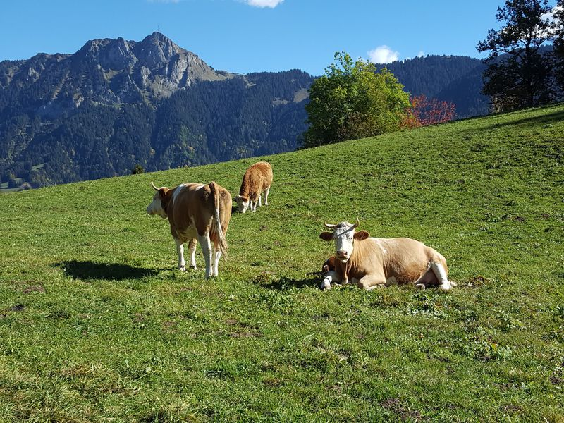 日当たり良好!スイス・レザンは豊富なアクティビティとチーズが魅力