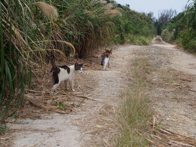 猫も一緒に生きる、あたたかい島
