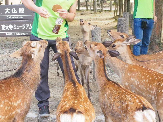 鹿せんべいにご注意を「奈良公園」