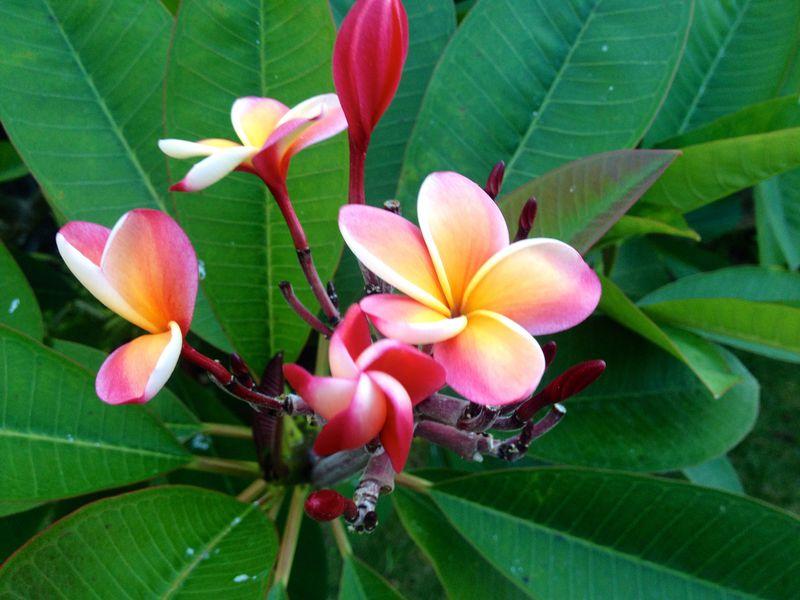 自然溢れるハワイのローカルタウン「カイルア・ラニカイ」をいいとこ取り