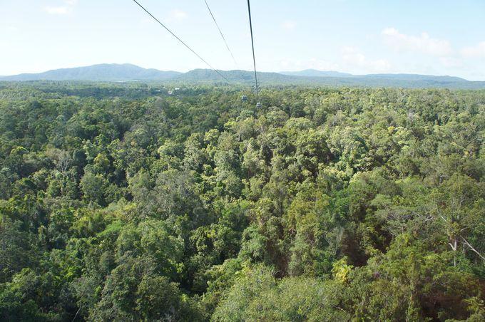 地球最古の熱帯雨林を眼下に臨むスカイレール