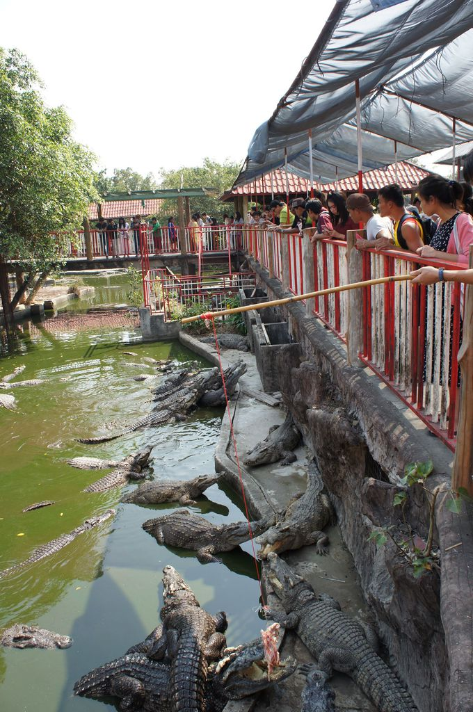 e96333578159 世界最大級!10万匹以上のワニが生息するタイのワニ園でスリル満点体験を ...