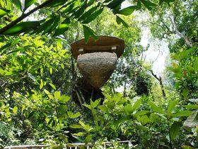 ジャングルで過ごす休日!タイ・クッド島のソネヴァキリ