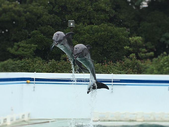 宙を舞うイルカが圧巻!「イルカショー」