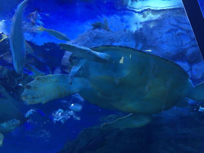 大小900尾もの魚が泳ぐ「トンネル水槽」