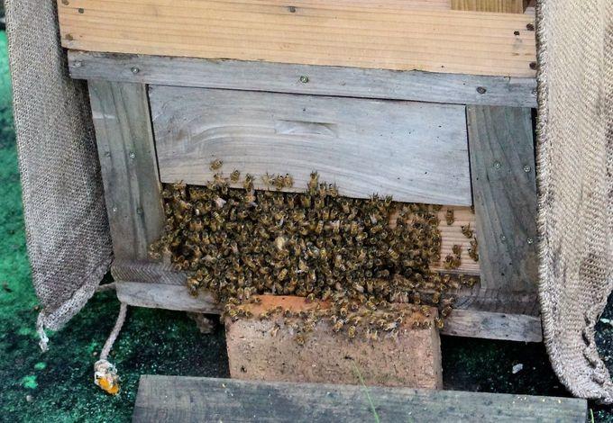 いよいよ屋上の養蜂場へ