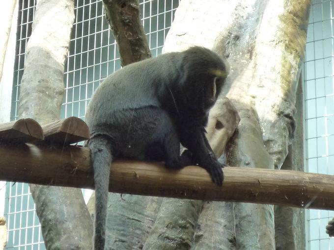 1843年創設の歴史ある動物園