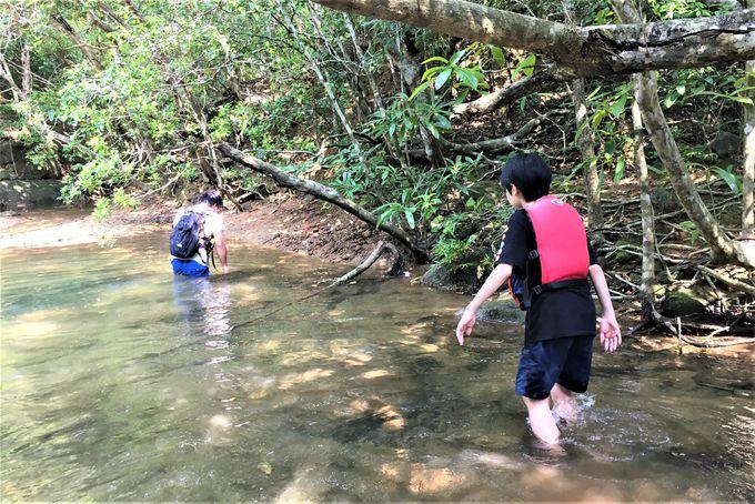 パイヌマヤの最大の魅力は自然体験プログラムにあり