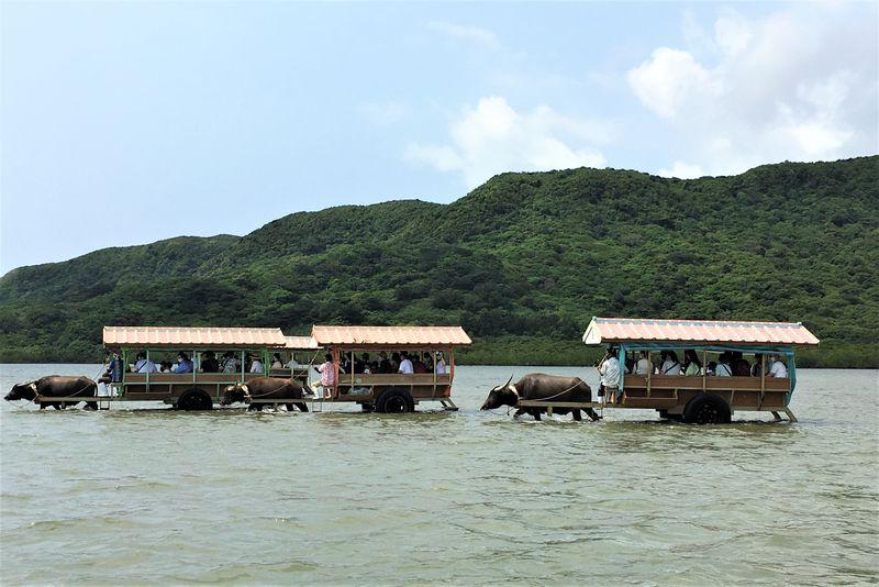 西表島から15分!水牛車に揺られて小さな楽園「由布島」へ