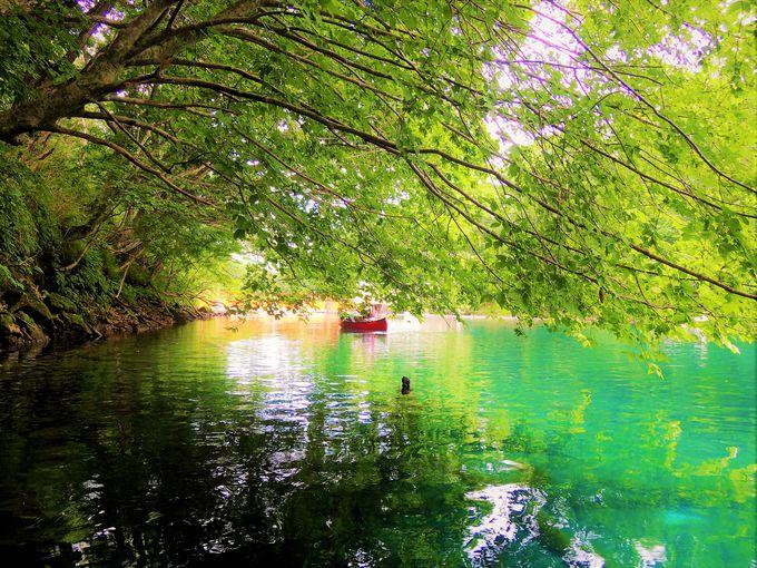 透明度の高さに驚愕!初心者でも楽しめるカヌー体験